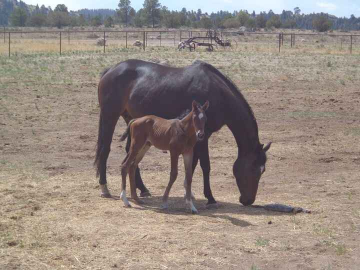 Memorial Day was a blessed day at the ranch too.   He is a leggy fellow!!  He is going to be a BIG boy!!