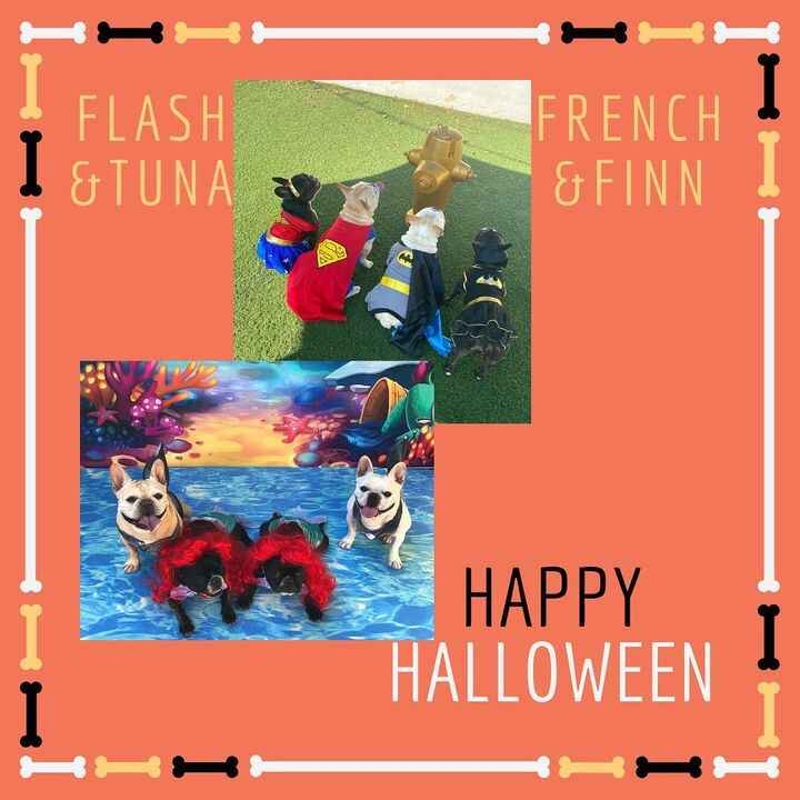 happy halloween, slide to see more of our furry guests who visited for a costume photoshoot! 👻✨🐾✨🎃 cheers!