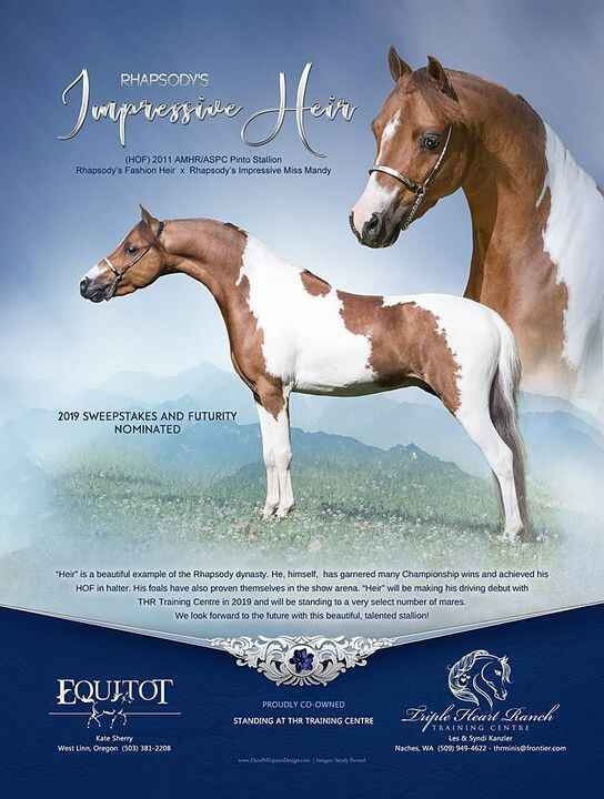 """We are so excited to have this stallion as part of our breeding program here at Triple Heart Ranch/Equitot Inc.  """"Heir"""" ..."""