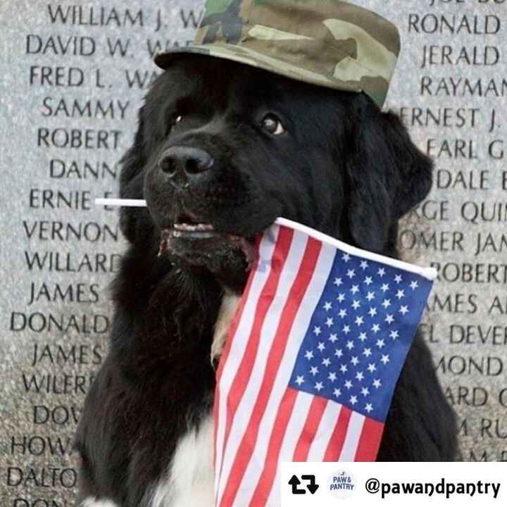 On this Memorial Day, we remember those who served & did not come home. Thank you for your service. 🇺🇲#Repost @pawandpan...
